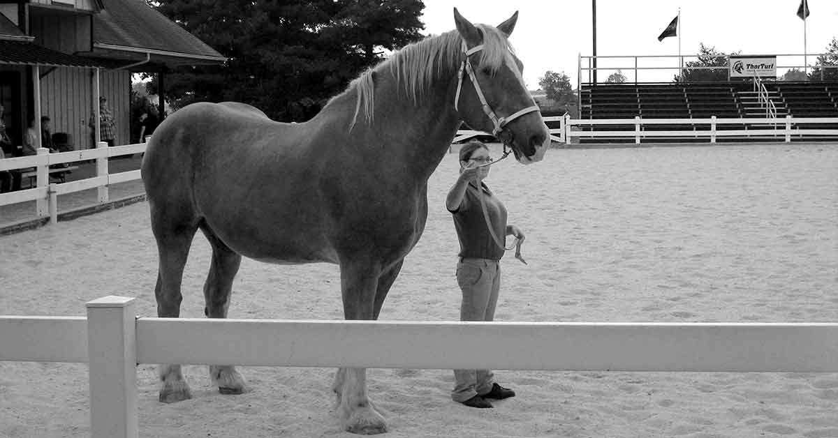 Woman dwarfed by a very large horse.